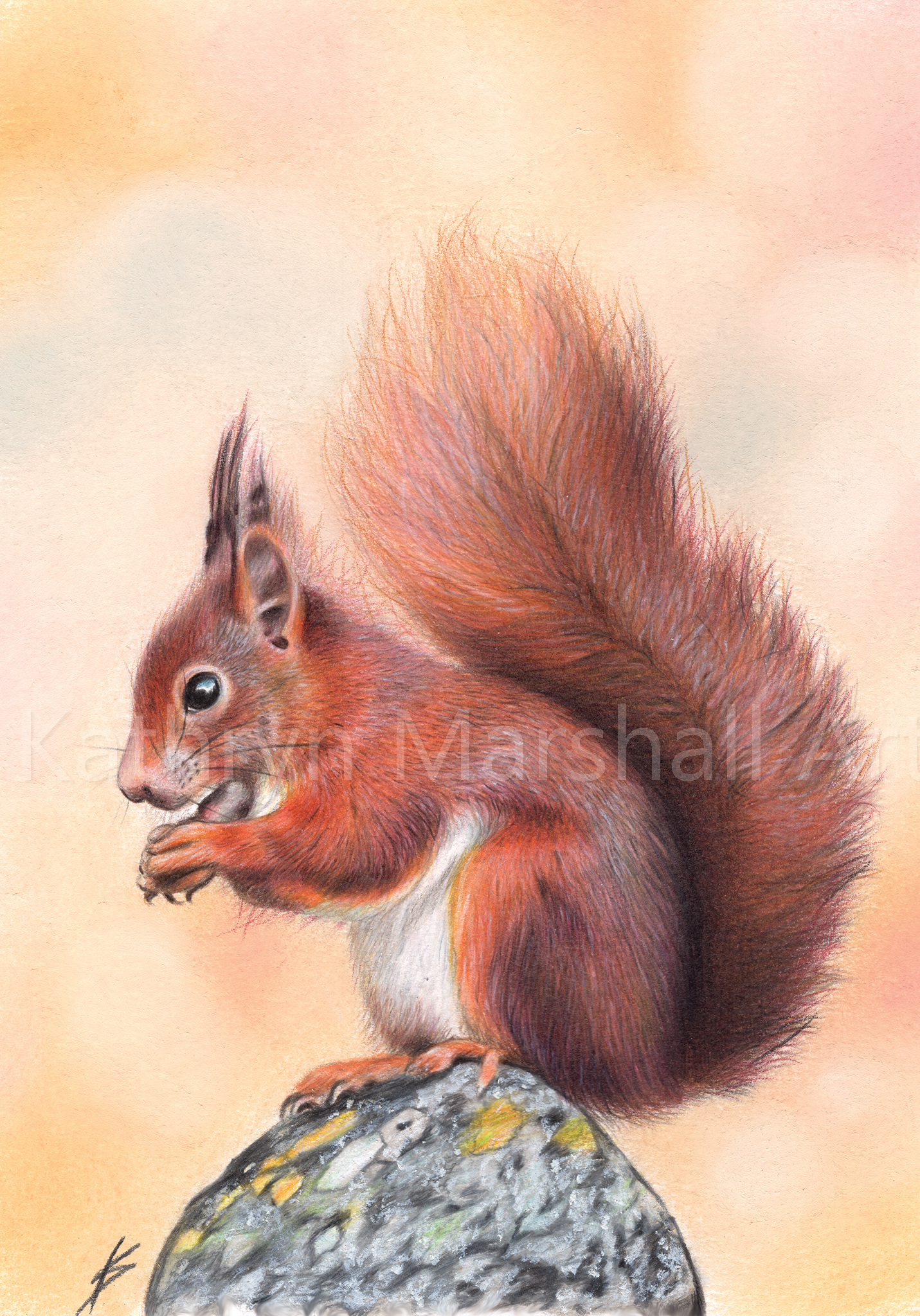 Sunset Squirrel A